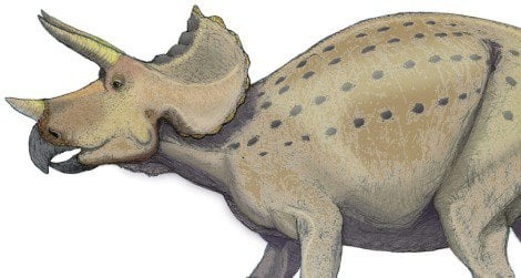 Possible postures of Triceratops