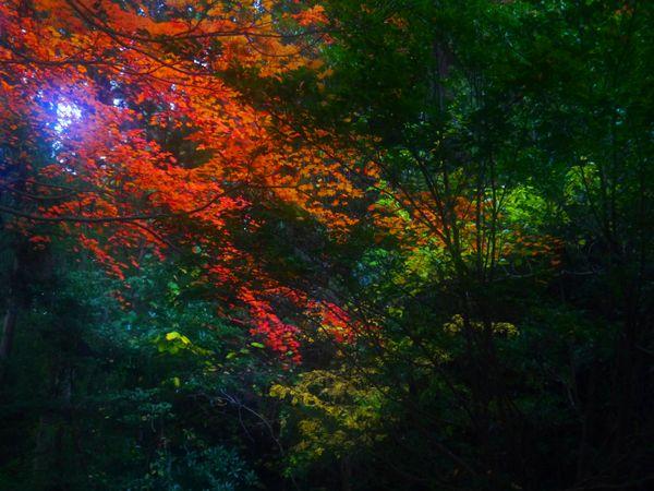 November Leaves in the sacred forest on phantom Isle thumbnail