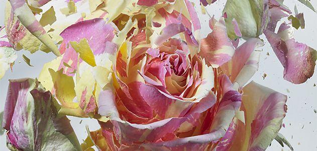 Collage-Frozen-Flowers