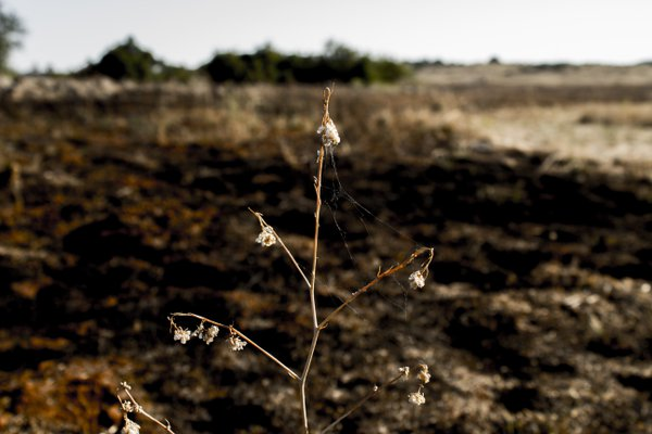 The delicate remains after a fire. thumbnail