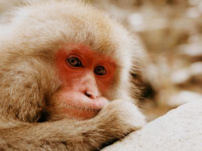 SOCIAL OPENER - female macaque