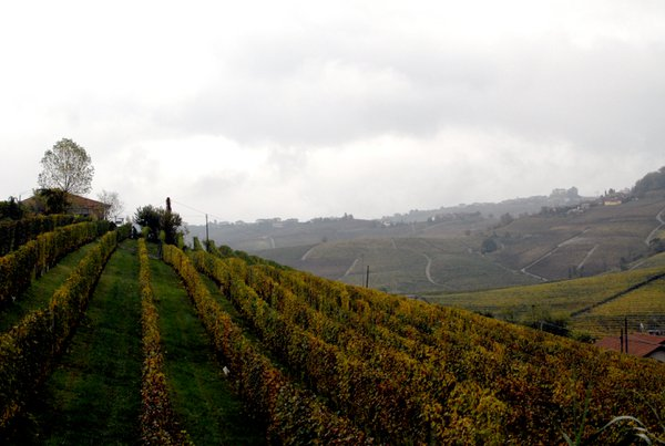 The wine valley and the fog thumbnail