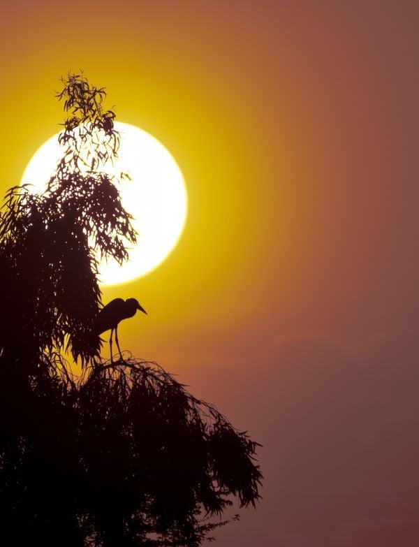 غروب الشمس وطائر البقر thumbnail
