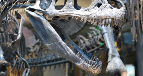 An Allosaurus threatens a Stegosaurus at the Natural History Museum of Los Angeles County.