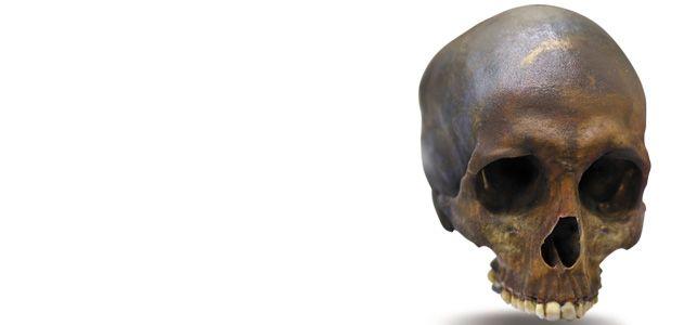 A replica of the skull of Robert Kennicott