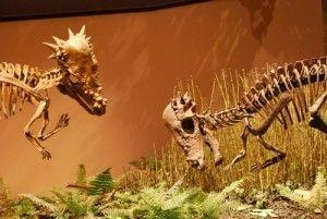 20110520083154pachycephalosaurs-face-off-300x201.jpg