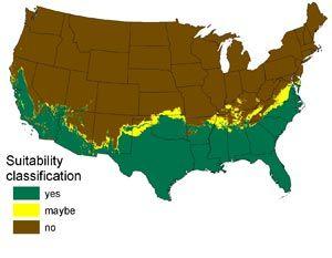 Are Pythons Coming to Your Neighborhood?