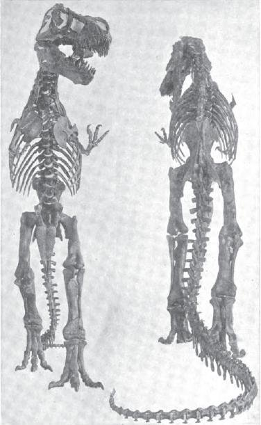 20110520083310tyrannosaurus-amnh-osborn.jpg