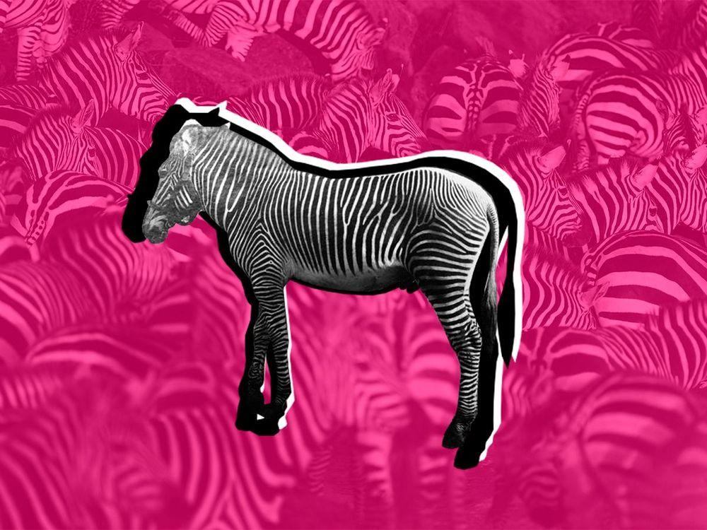 Dan_Zebra.jpg