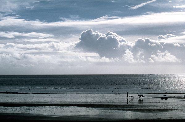 Man walking dogs on beach in Isle of Man thumbnail