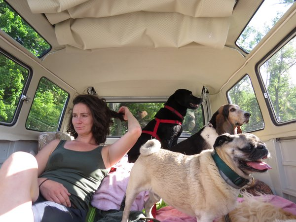 Dogs on the bus thumbnail
