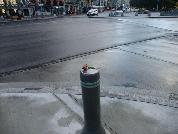 tulip on the Elgin Street thumbnail