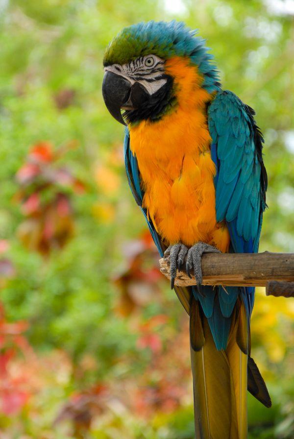 Macaw perch thumbnail