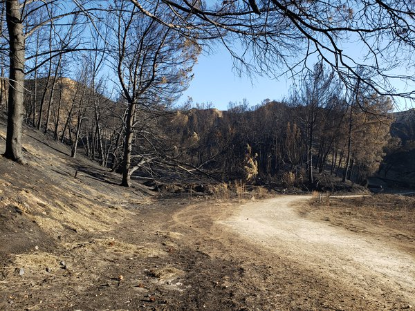 The ash trail thumbnail