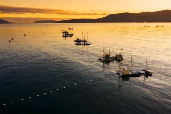 Reefnet Salmon Fishing Boats at Sunset thumbnail