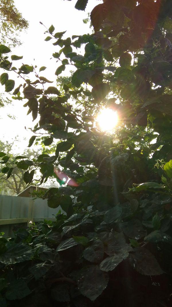 The Early Morning Sun thumbnail