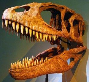 20110520083133skull-wikipedia-carcharodontosaurus-300x276.jpg