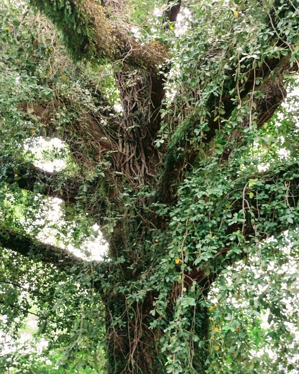 Tree Being thumbnail