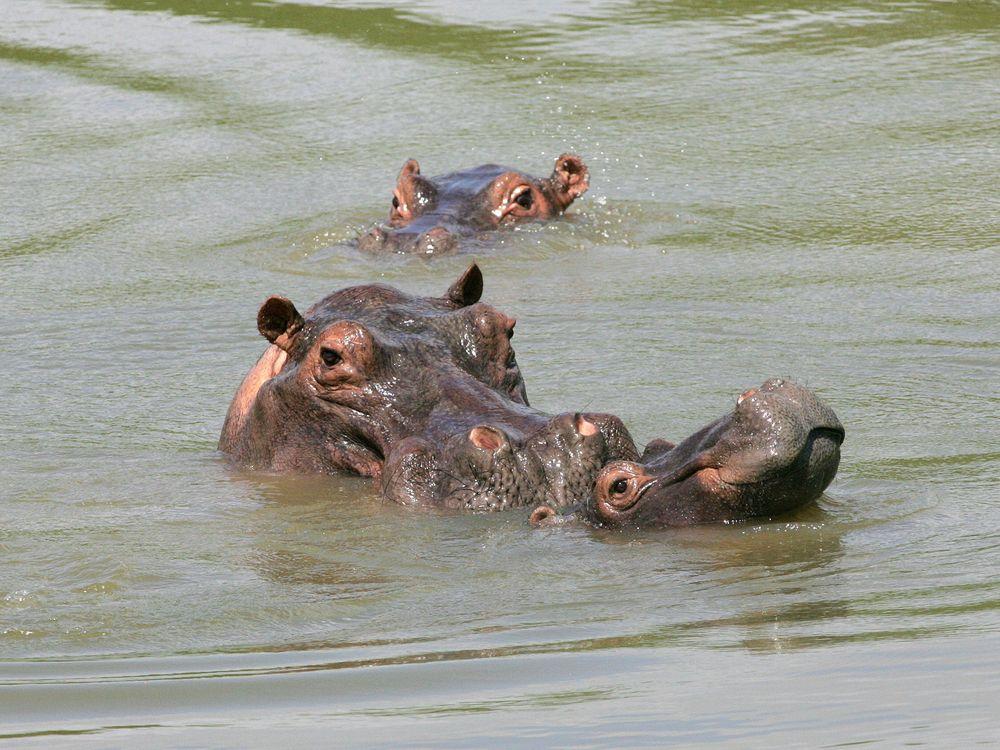 06_27_2014_hippo.jpg