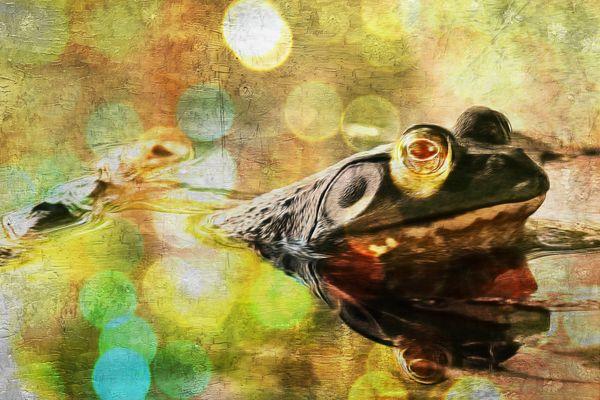 American Bullfrog Bokeh Digital Art thumbnail