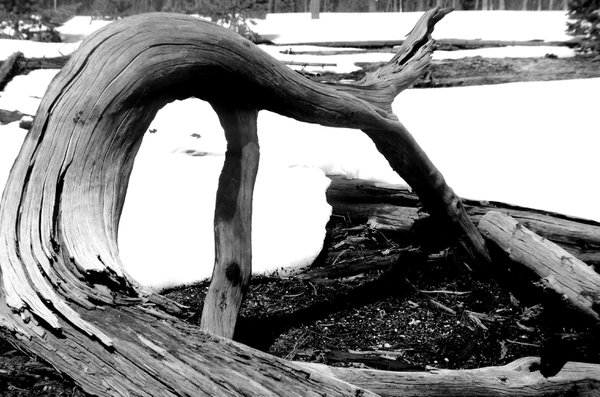 branch in snow thumbnail