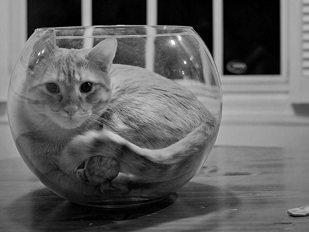 Ig Nobel cat