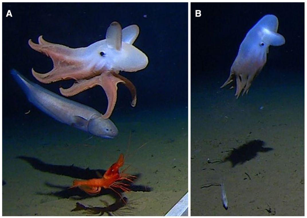 An octopod near the ocean floor.