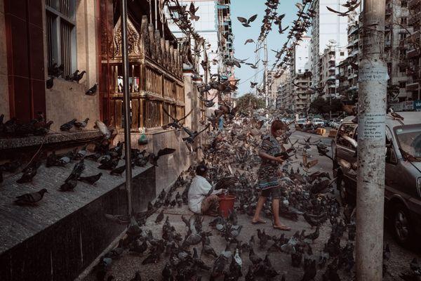 Pigeon's street thumbnail