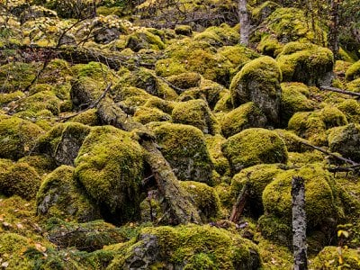 Many types of mosses live in British Columbia.