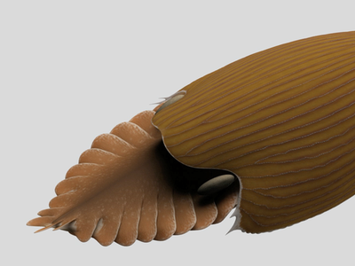 T. gainesi  was enormous compared to other ocean creatures living during the Cambrian era, measuring almost 2 feet or half a meter long when most other species measured about the size of a pinky finger.
