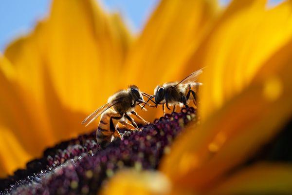 Whispering Bees thumbnail