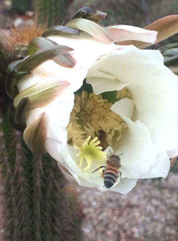 Blossom and Bees thumbnail