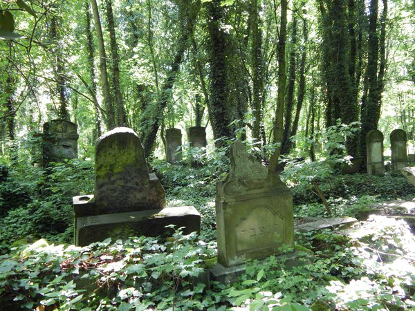 Scattered tombstones in the Jewish cemetery in  Częstochowa thumbnail