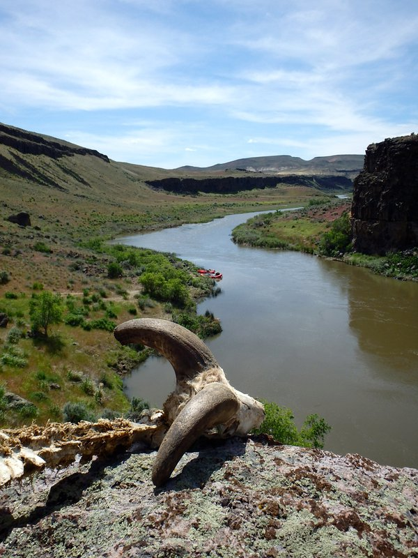 Life and Death on the Owyhee thumbnail