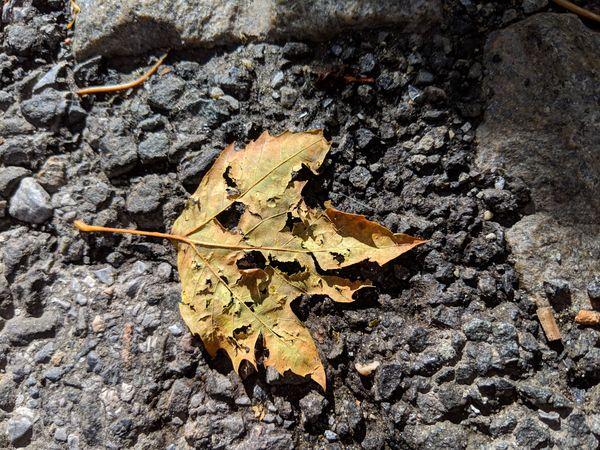 Fall Leaf thumbnail