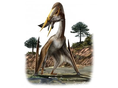 The largest pterosaurs had wingspans like small aircraft and longer necks than giraffes.