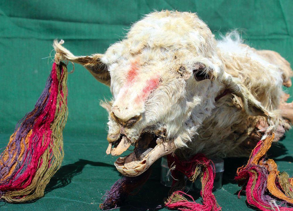Decorated llama