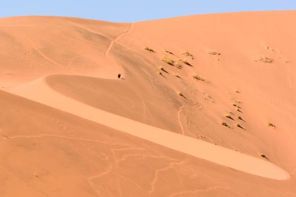 Deadvlei Sand Walkers thumbnail