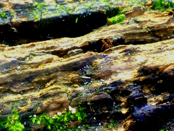 Ant on a Log thumbnail