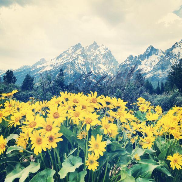 Grand Teton mountain backdrop  thumbnail
