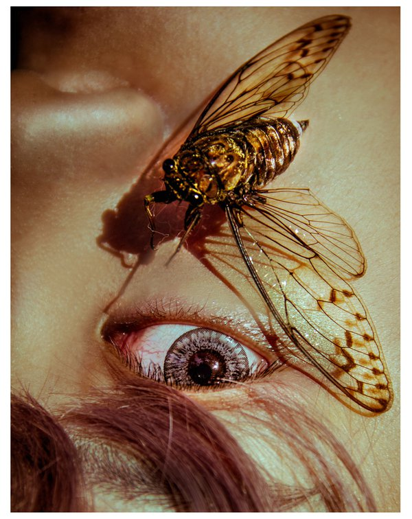 Eyes and cicada thumbnail