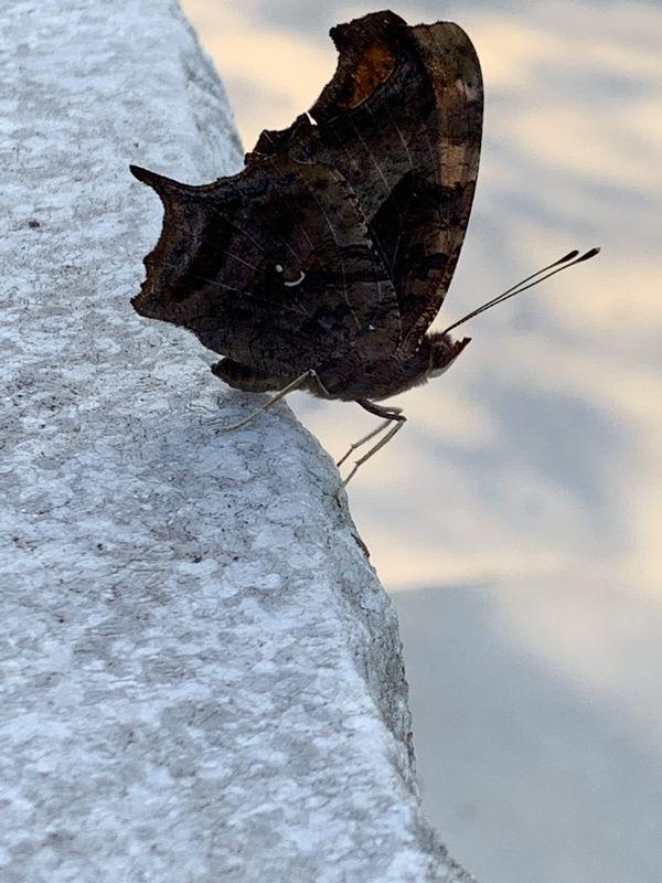 moth thumbnail