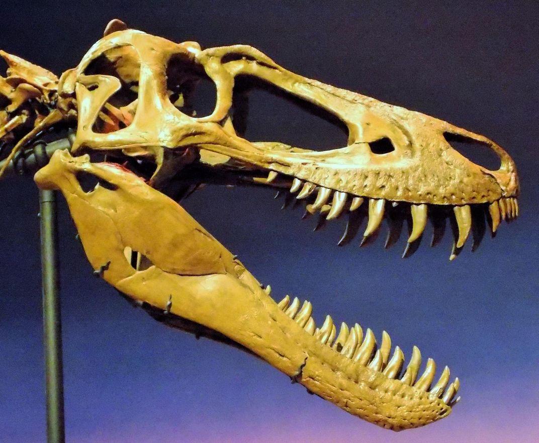 Teenage T. Rex Fossils Reveal Haphazard Growth Spurts