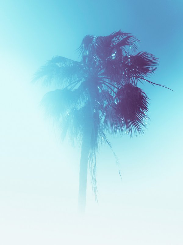 Blue Palm (Turks and Caicos) thumbnail