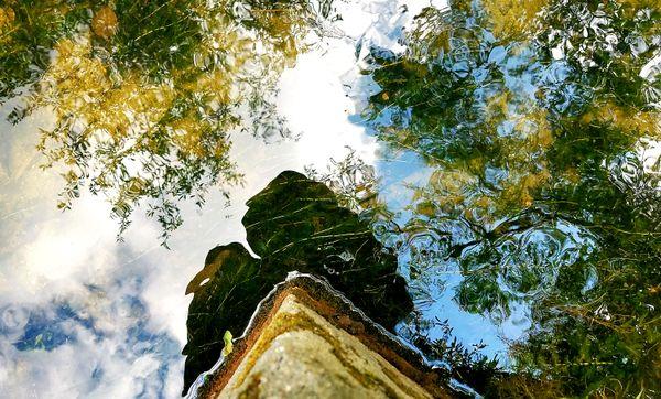 Reflections on Summer Brook thumbnail