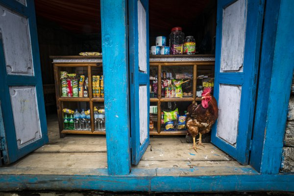 Rooster in the store front. Phakding, Nepal thumbnail