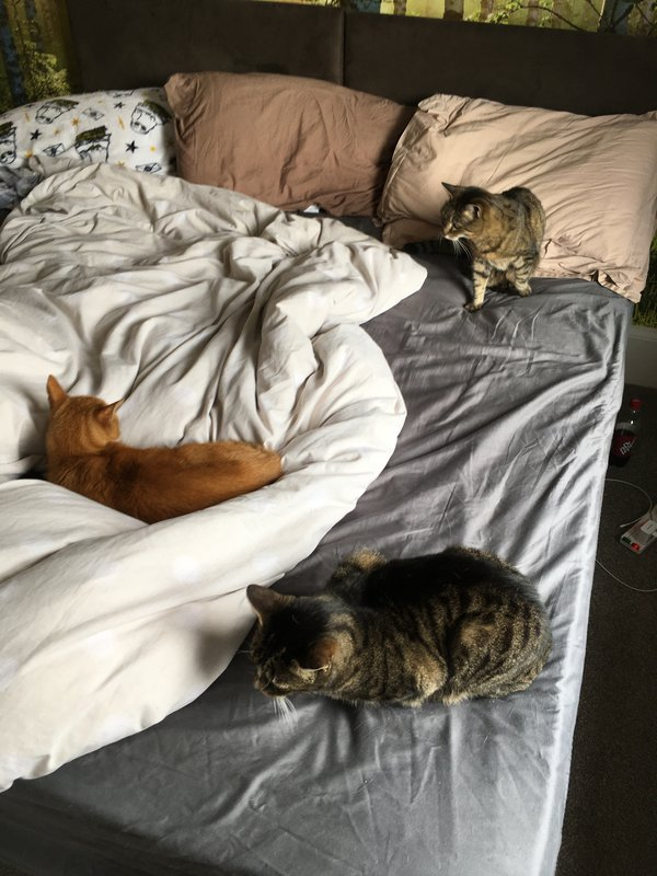 Cats on a bed thumbnail