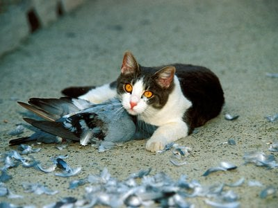 Do outdoor cats need to die?