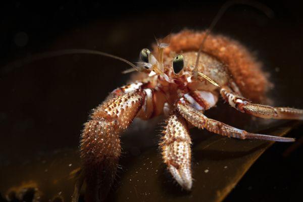 Hermit Crab thumbnail