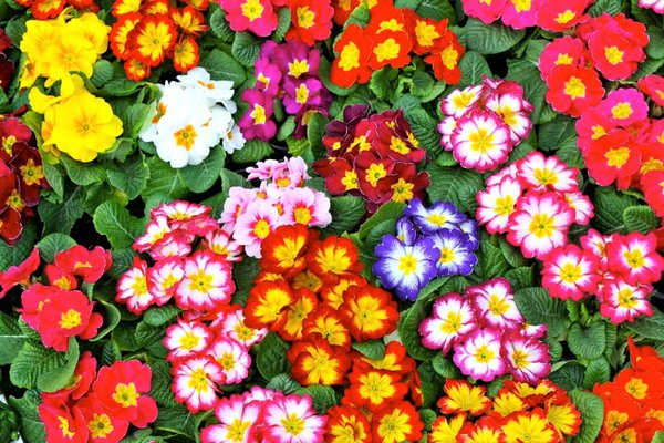 Colourful flower plants in a market thumbnail